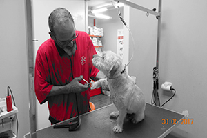 Peluqueria Canina en Aguadulce