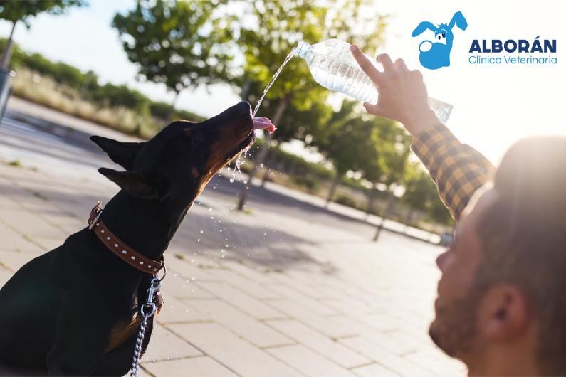 Perro bebiendo agua en un caluroso día de verano