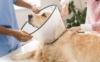 Esterilización preventiva: descubre sus beneficios para la salud de tu mascota