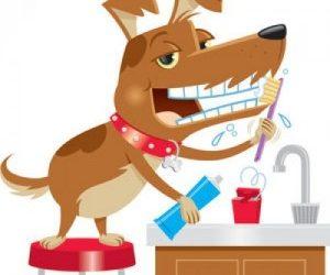 lavar-dientes-perro