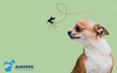 eishmaniosis-veterinario-aguadulce