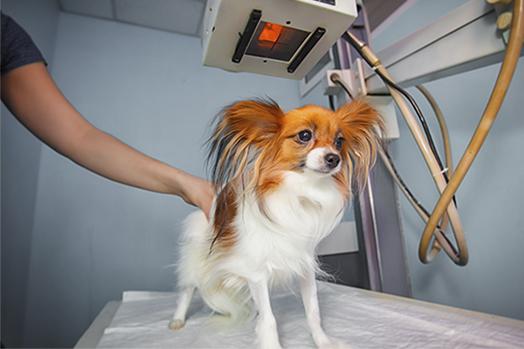 Diagnostico patologías en mascotas