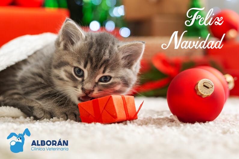 feliz navidad 2020 veterinario aguadulce