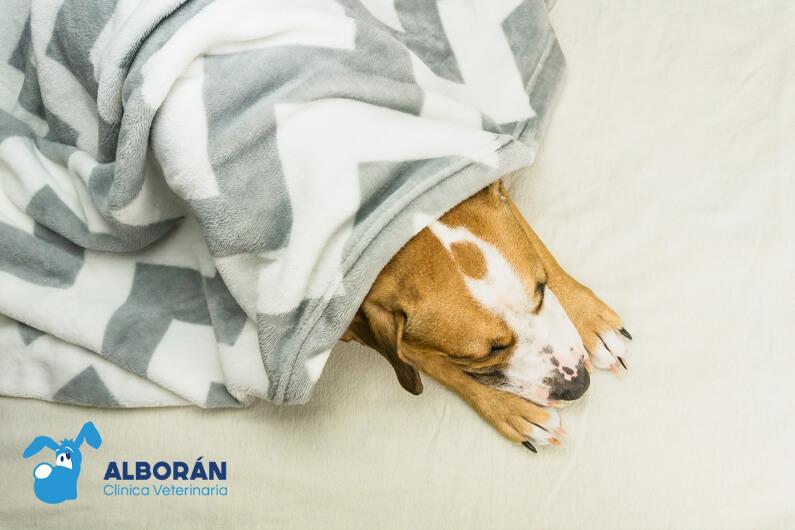 consejoscuidados proteger perro frio