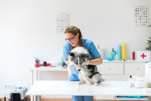 laser veterinario