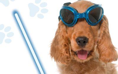 Campaña Laserterapia 2020: protección de vanguardia para tu mascota