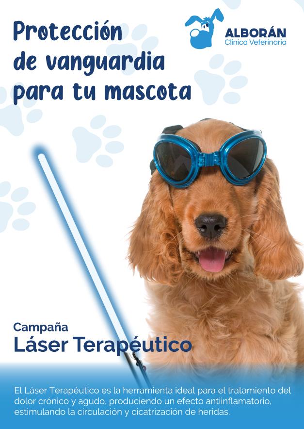laserterapia veterinaria perros gatos aguadulce