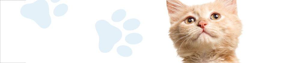 campana-vacunacion-veterinario-aguadulce