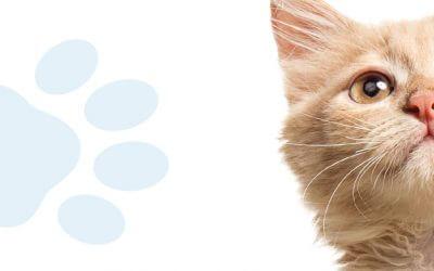 Campaña de Vacunación de Mascotas en Aguadulce