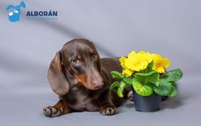 Alergia primaveral en perros: ¿cuáles son sus síntomas y tratamiento?