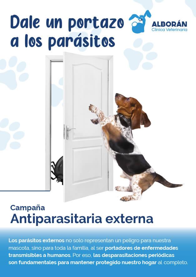 campana vacunas perros gatos aguadulce