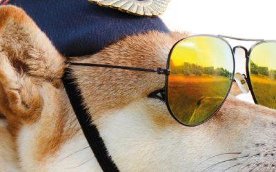 Campaña Planes de Salud 2021: protege a tu mascota con Vetplan