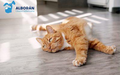9 claves para proteger a tu gato del calor