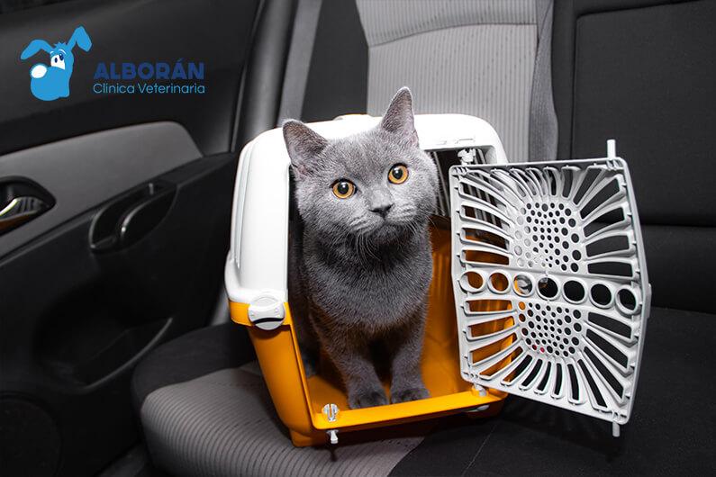 Cómo transportar a tu mascota durante los viajes