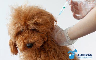 La rabia en perros: qué es y por qué es importante prevenirla