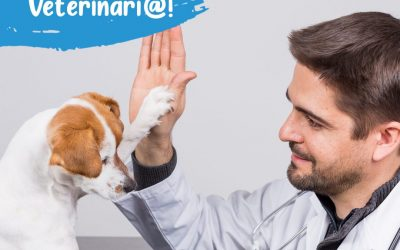 ¡Buscamos veterinario!